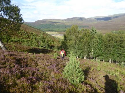 August in the Cairngorms
