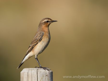 birdwatching near Aviemore