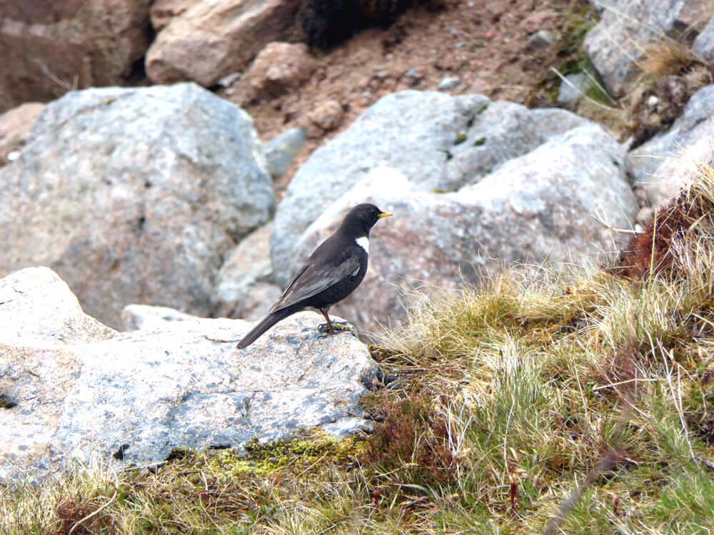 birdwatching in the Cairngorms