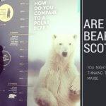 bears in Scotland