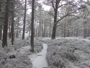 when to come to the Cairngorms