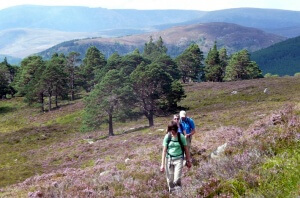 Guided hiking in the Cairngorms