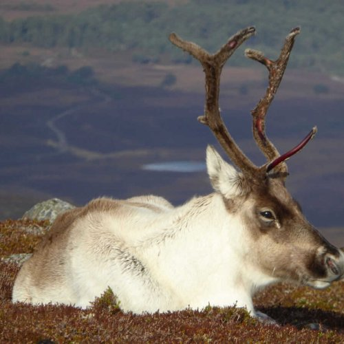 discover the Cairngorms