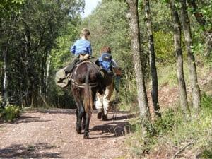 Donkey trekking - tired child