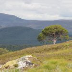 guided walking scotland