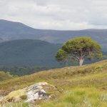 Cairngorms walking tour