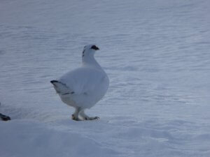 winter wildlife Cairngorms