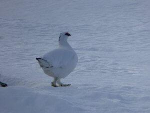 winter wildlife Cairngorms