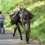 Trekking with a donkey