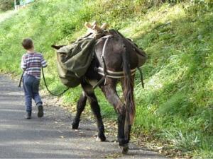 donkey trekking - leading
