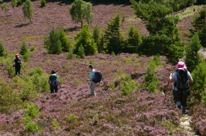 Walking holidays in the Cairngorms
