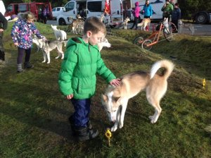 When are the huskies in Aviemore?