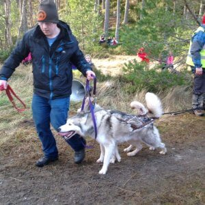 when are the sled dogs in Aviemore?