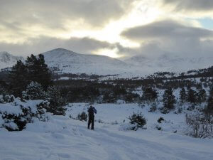 Guided winter walking in the Cairngorms