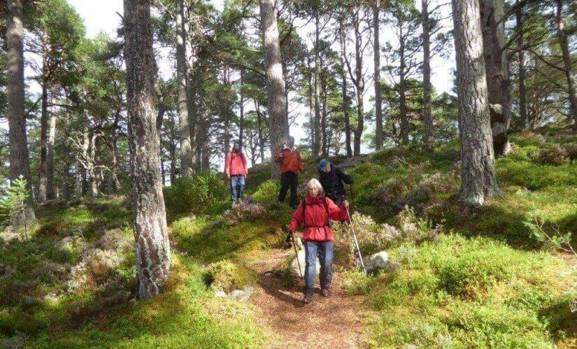wild Cairngorms