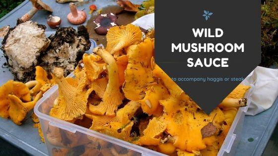 wild mushroom recipe