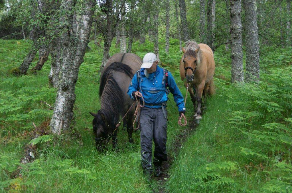 hiking with horses