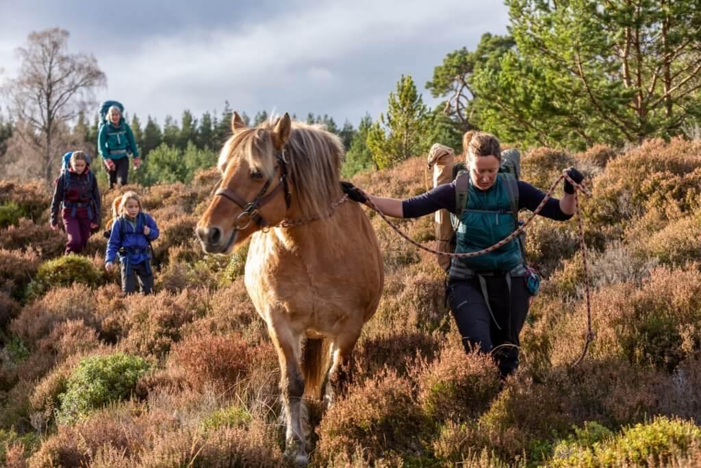 horse welfare - no pack goldie